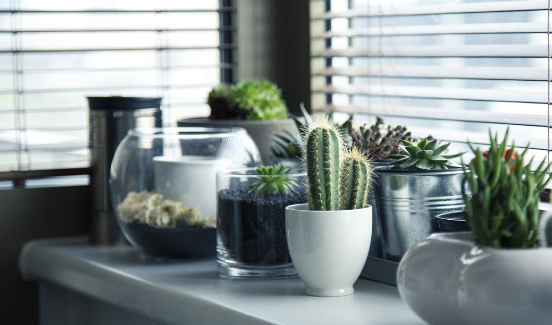 Was tun gegen zu feuchte Luft in Räumen?